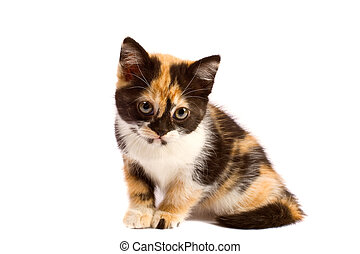 tristeza, gatito, se sienta