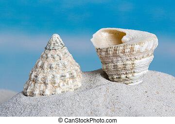Trochus seashell on beach