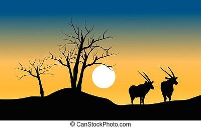 trocken, baum, antilope, silhouette