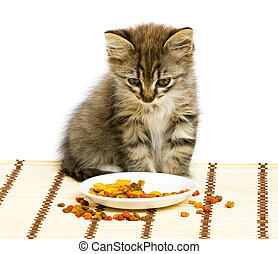 trocken, essende, essen., kã¤tzchen, klein, katz