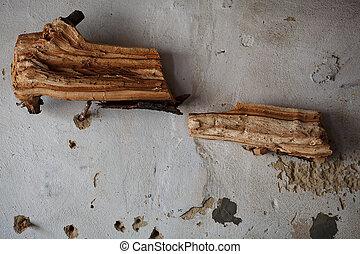 troféu, antigas, parede, conceito, madeira,  Interior, pedaço