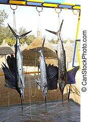 trofeo, sailfish, marlin, pesca, ahorcadura, coger