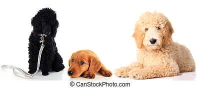 trois, ensemble., chiens
