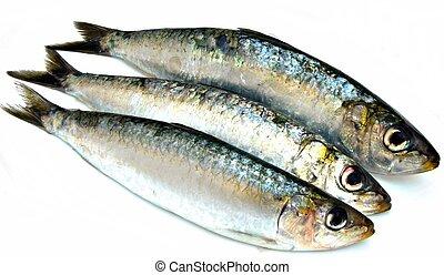 trois, sardines