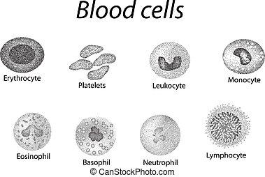 trombocyt, sätta, cells., celler, neutrophils, isolerat, illustration, monokrom, infographics., vektor, blod, bakgrund, lymphocytes, monocytes., eosinophils, leukocyter, röd, basophils