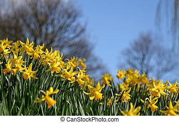 tromboni, in, primavera