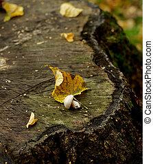 tronçon arbre, champignon