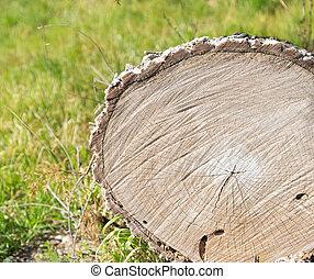 tronçon arbre, nature