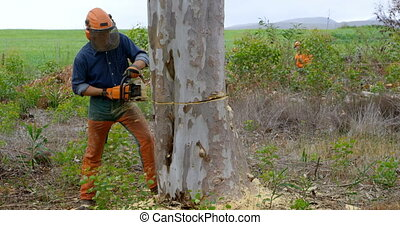 tronçonneuse, arbre, découpage, 4k, bûcheron, coffre