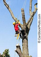 tronçonneuse, découpage, arbre, arborist