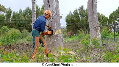 tronçonneuse, forêt arbre, découpage, 4k, bûcheron, coffre