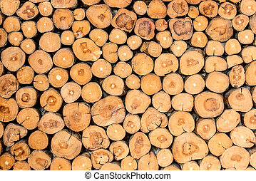tronçons arbre, fond