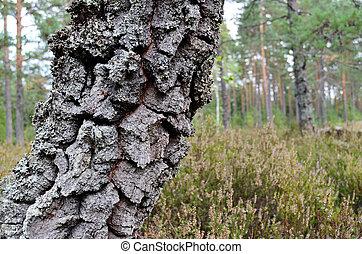 Fond abattu ciel for t arbres bleu abattu ciel - Mousse sur les arbres ...