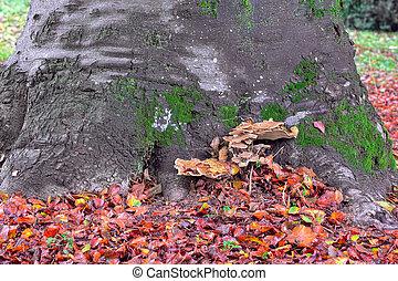 tronco árvore, com, mashrooms, e, vermelho, caído, leaves.