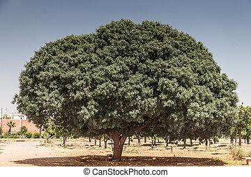 tronco árvore, em, tempo verão