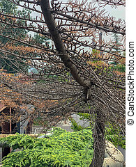 tronco, leafs, arriba, corteza, árbol, texture., cierre, fir...