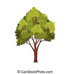 tronco, ramas, ilustración, planta, hojas, planta perenne, vector, árbol, verde