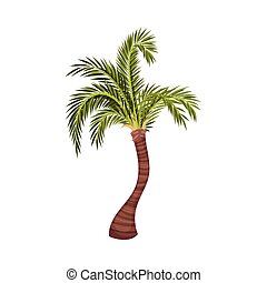 tronco, ramas, ilustración, planta, palma sale, vector, árbol, tropical