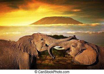 troncos, elefantes, monte, savanna., su, kilimanjaro, ocaso,...