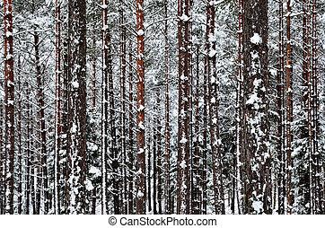 troncos, inverno, fundo