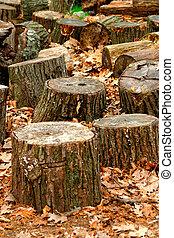 troncs, arbre
