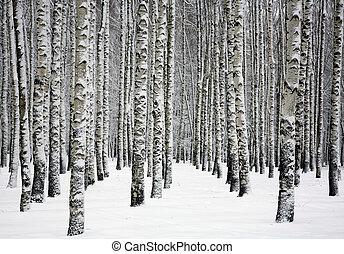 troncs, hiver, arbres neigeux, forêt, bouleau