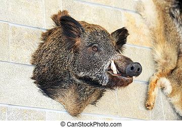 Trophy hog