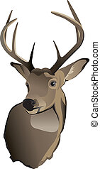A shoulder mount of a trophy whitetailed deer buck.