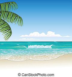 beach - tropic beach