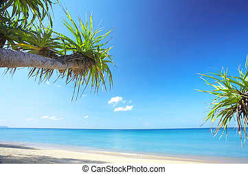 tropic beach - View of nice empty sandy beach with fragment ...