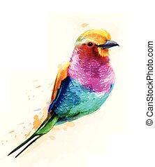 Tropic colorful bird Vector watercolor. Cute small bird illustrations