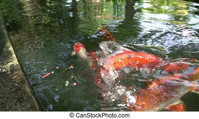 Tropic fish close up shot.