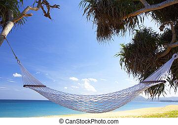 tropic hammock - view of nice white hammock hanging between ...