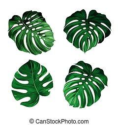 Tropic leaves - set of leaves monstera