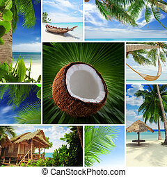 tropic mix - Tropic theme collage composed of different ...