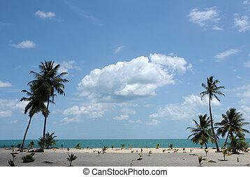 Tropic palms on a sandy beach. Caribbean sea. Belize