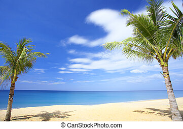 tropic scene - View of nice tropical empty sandy beach with...