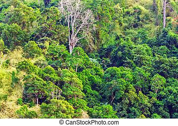 tropicais, árvore verde, floresta, natureza