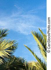 tropicais, (1), feriado, relaxamento