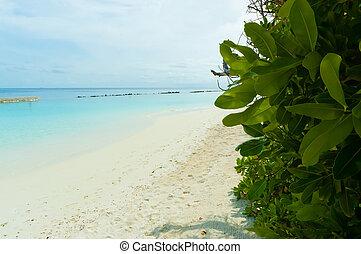 tropicais, 2, paraisos