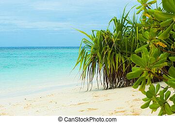 tropicais, 2, praia
