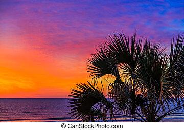 tropicais, amanhecer