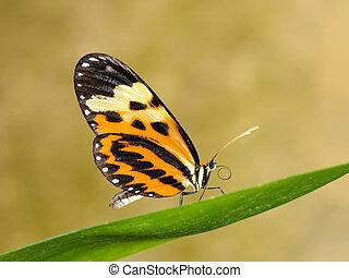 tropicais, borboleta, ligado, folha