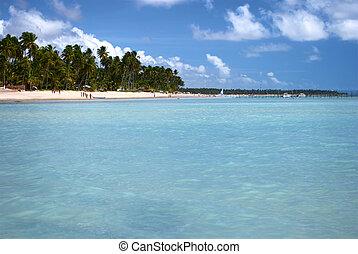 tropicais, brasil, praia