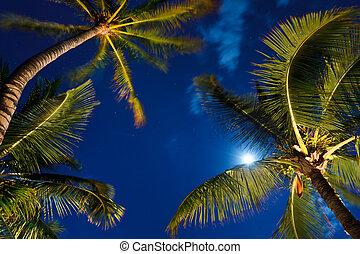 tropicais, céu noite, coqueiros, e, lua