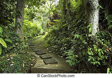 tropicais, caminho, jardim