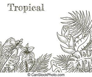 tropicais, desenhado, vetorial, ilustração, mão