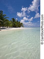tropicais, encantador, praia, vista