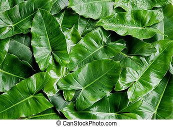tropicais, experiência., folhas, verde