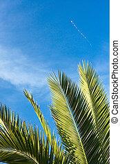 tropicais, feriado, (2), relaxamento